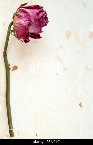 One dry rose on stained paper with copy-space - Stock Photo