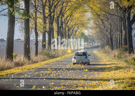 Fallen yellow poplar leaves whirling behind the riding car - Stock Photo