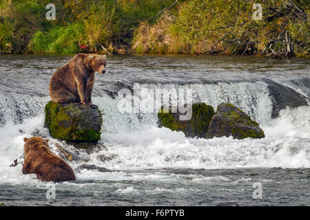 A young male brown bear sits on one of the rocks by Brooks Falls as he prepares to return to his fishing spot - Stock Photo