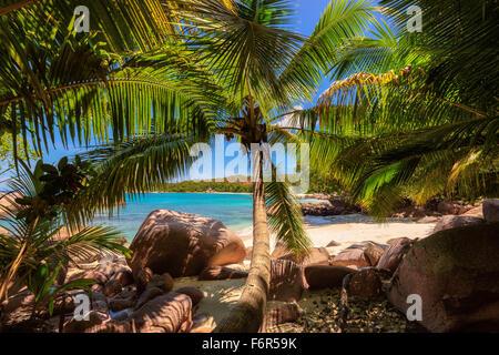 Palm trees on tropical Anse Lazio beach, Seychelles - Stock Photo