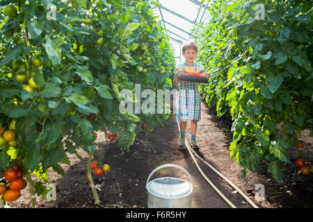 Boy in greenhouse among tomato plants - Stock Photo
