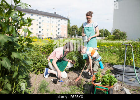 Family working together in vegetable garden - Stock Photo