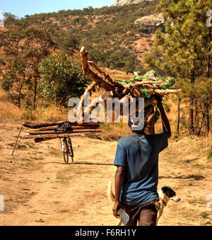 A man carrying illegally harvested firewood  on his head within Chongoni Forest, Dedza, Malawi - Another load is - Stock Photo