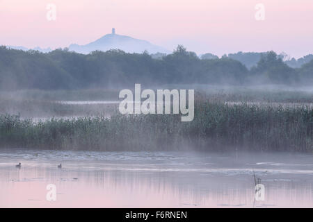A misty morning at Shapwick Heath Nature Reserve, Somerset, with Glastonbury Tor in the distance. - Stock Photo