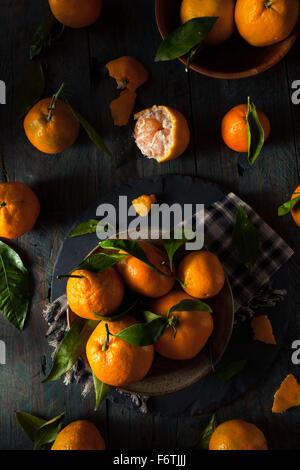 Raw Organic Satsuma Oranges with Green Leaves - Stock Photo