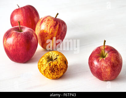 Four fresh red apples and a shrivelled one on white wood - Stock Photo