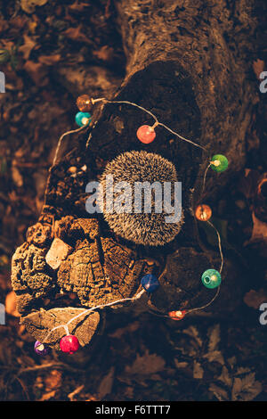 Sleeping hedgehog lying on dead wood in a forest - Stock Photo