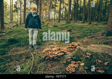 Little boy standing in forest, looking at honey fungi - Stock Photo