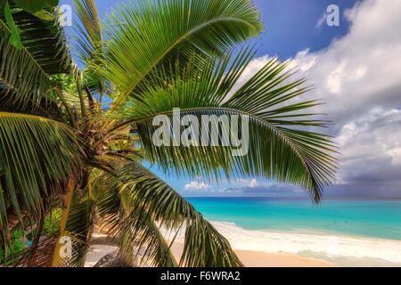 Palm tree on Anse Lazio beach on Praslin island in Seychelles - Stock Photo