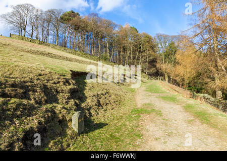 Spring sunshine falling on a hillside footpath leading to trees in a mixed woodland in North Derbyshire, England, - Stock Photo
