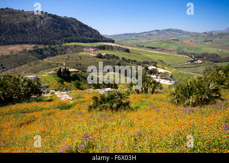 Blooming Flowers in the sicilian landscape, Ancient site of Segesta, Sicily, Italy - Stock Photo