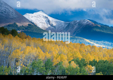 Aspen and snow-capped peaks, La Sal Mountains, Utah Manti-La Sal National Forest, new Moab,  Populis tremulodies - Stock Photo
