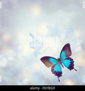Blue Tropical Butterfly for Background - Stock Photo