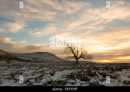 A lone tree on a snow covered limestone pavement with Ingleborough Mountain in the background - Stock Photo