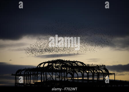 During sunset starlings perform a murmuration in the sky above the derelict West Pier in Brighton, East Sussex, England.