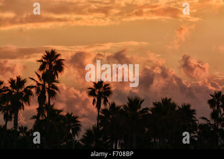A dark sunrise with storm clouds forming a beautiful morning behind a group of tropical palm trees - Stock Photo