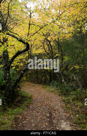 Path Inside Mixed deciduous forest, wood, woods in autumn, Spain. - Stock Photo
