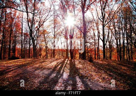 autumn morning in forest with sun rising through trees - Stock Photo