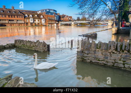 WINDSOR BERKSHIRE, UK- 11 January, 2014: View of Eton Bridge with a swan swimming on the flooded foot path on the - Stock Photo