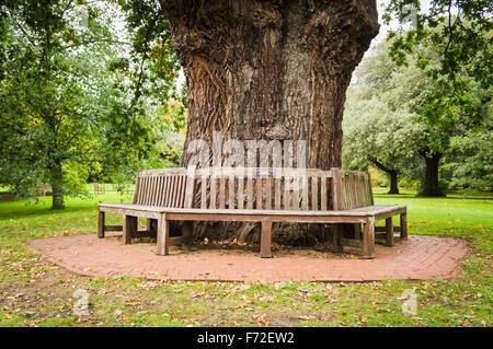 Lockerbie PanAm103 In Rememberance Memorial Benches round tree, Kew Gardens - Stock Photo