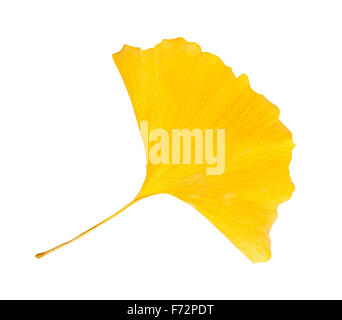 ginkgo dried  leaf isolated on white background - Stock Photo