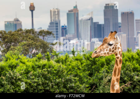 how to get to taronga zoo from sydney cbd
