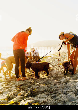 Beach goers with their loving pets meet on Laguna beach California. - Stock Photo
