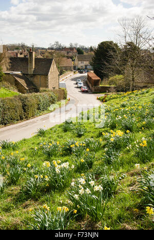 Daffodils on a roadside bank on the approach to Lacock village in Wiltshire UK - Stock Photo