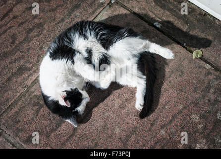 Black and white cat asleep on patio slabs in sunshine - Stock Photo