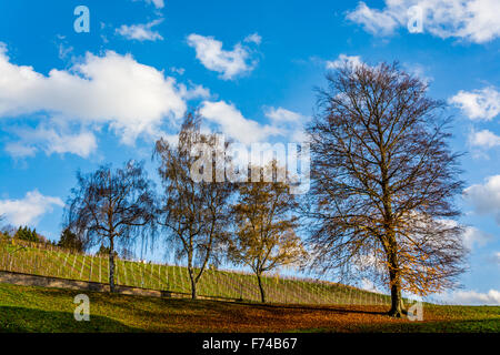 German vineyard and trees on a beautiful autumn day