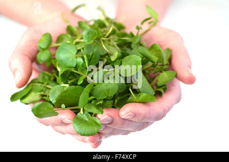Woman hands offering Watercress.Food background texture and concept. Superfoods - Stock Photo