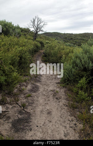 Hiking Trail on the Tounge Point Track in the Wilsons Promontory National Park, Victoria, Australia. - Stock Photo