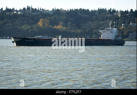 Seattle, Washington, USA. 21st Nov, 2015. The Gallia Graeca, a 39,000 plus ton bulk cargo carrier, sits low in the - Stock Photo