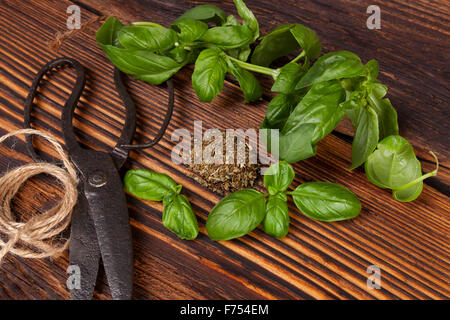 Aromatic culinary herbs, basil. Fresh and dry basil herb with vintage scissors on rustic wooden background. - Stock Photo