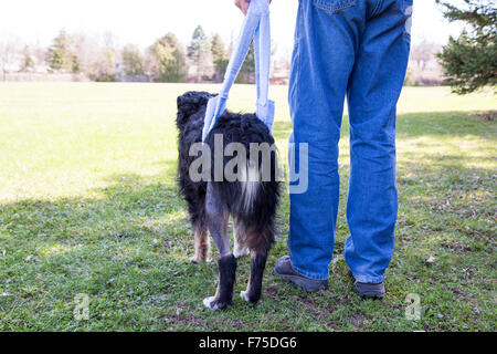 Man with injured dog contemplating the big park ahead, during a rehabilitating walk in a sling - Stock Photo
