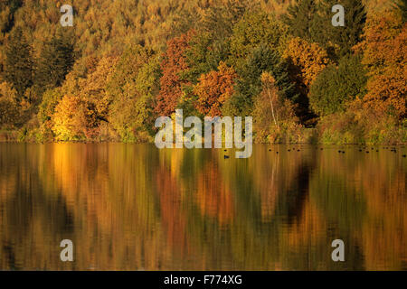 Colourful deciduous forest in autumn, Lake Sorpesee, Langscheid, Sauerland, North Rhine-Westphalia, Germany - Stock Photo