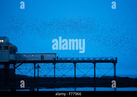 Aberystwyth, Wales, UK. 26th November, 2015.  A huge flock of starlings perform spectacular displays in the air - Stock Photo