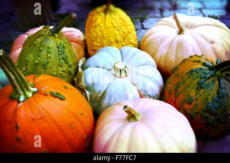 Pumpkins! Pile of vibrantly colored pumpkins ready for the picking! - Stock Photo