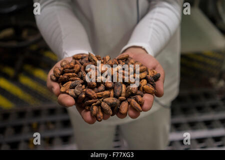 Robinson Rendon, Chief of Production for Casa Luker chocolate company holds a batch of dried cocoa beans ready to - Stock Photo