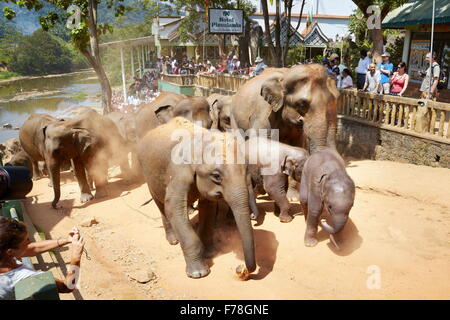 Sri Lanka - elephant coming back from bath, Elephant Orphanage, Pinnawela (Kegalla District of Sri Lanka) - Stock Photo