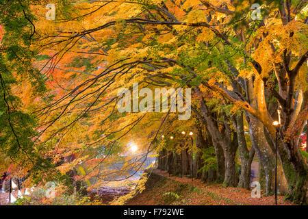Maple Corridor near Kawaguchi Lake in Japan during autumn. - Stock Photo