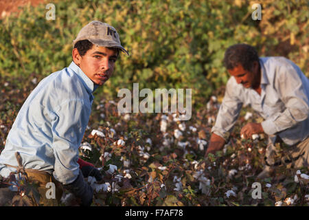 Child workers work in very difficult conditions,They can not go to school to work in the cotton fields.Harran plain - Stock Photo