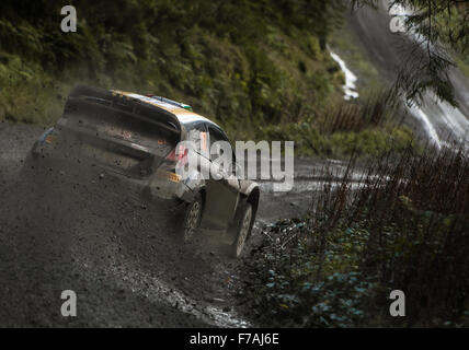 WRC F.W.R.T Ford Fiesta RS of lorenzo Bertell At Wales Rally GB 2015 - Stock Photo