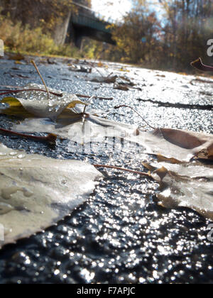 A very low angle of a wet bike path after an autumn rain on the Ashuwillticook Rail Trail in Adams, Massachusetts. - Stock Photo