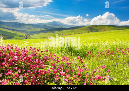 Sicily spring meadow landscape with flowers, Sicily Island, Italy - Stock Photo