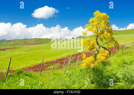 Sicily spring meadow landscape, Central Sicily, Italy - Stock Photo