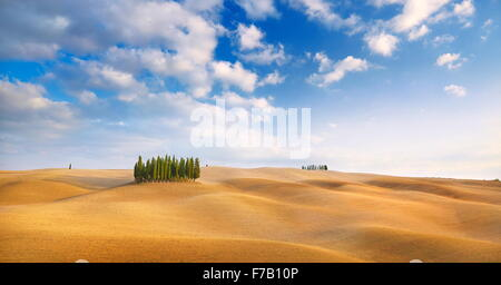 Cypress trees landscape, Val d'Orcia, Tuscany, Italy - Stock Photo