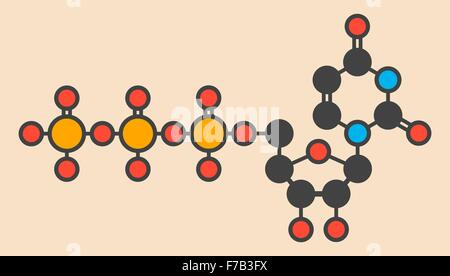 Cytidine triphosphate (CTP) RNA building block molecule. Also functions as cofactor to some enzymes. Stylized skeletal - Stock Photo
