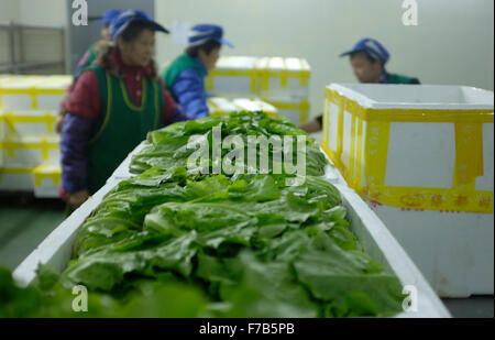 Chengdu, China' Sichuan Province. 28th Nov, 2015. Workers pack vegetables at a refrigeratory in Chengdu, cpital - Stock Photo