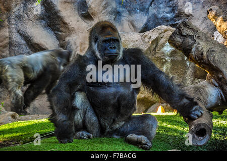 Majestic gorilla in the zoo - Stock Photo
